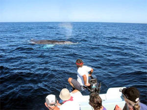Whales are a common sight on Todos Santos fishing trips.