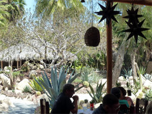 A very relaxing setting in Todos Santos.